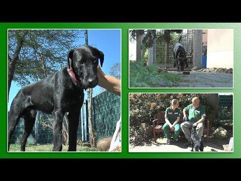 Hundevermittlung - April/Mai 2019 (Tierheim Hannover TV)