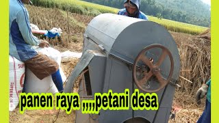 perontok padi sederhana,_simple rice thresher machine