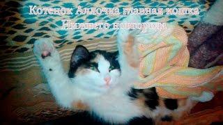 Котенок Аллочка главная кошка Нижнего Новгорода