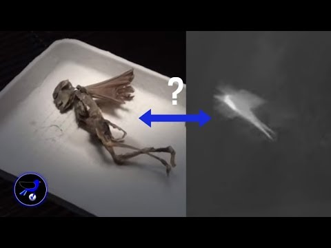 A strange flying Creature was captured on Security cam over New Jersey! Nov 7,2018