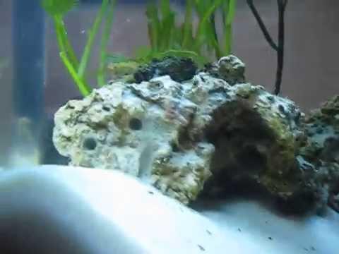 8 Gallon Dwarf Seahorse Tank - Month One