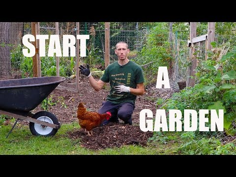 How to Start A Food Forest Garden! Organic Gardening