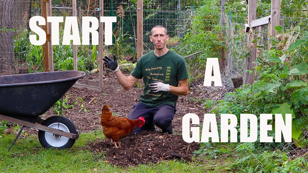 how to start a food forest garden organic gardening youtube