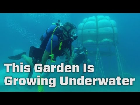 This Garden Is Growing Underwater