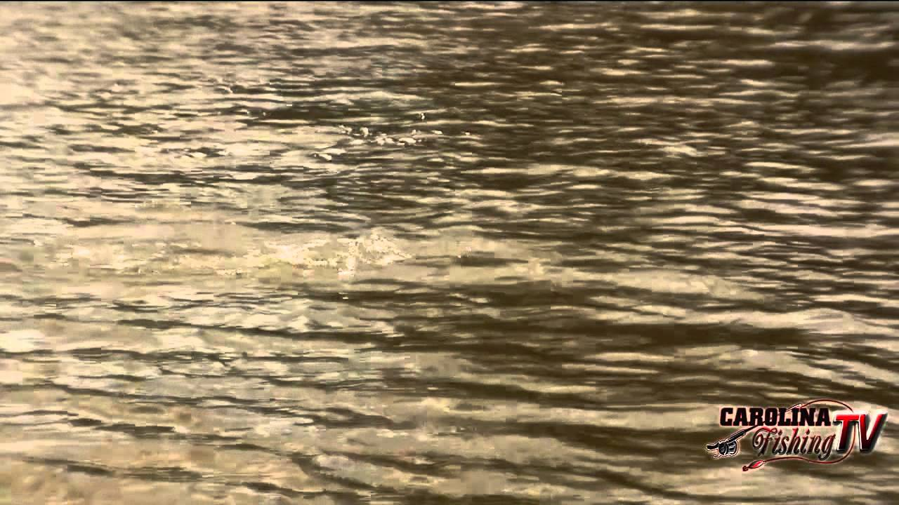 Carolina fishing tv season 2 3 neuse river super slam for Carolina fishing tv