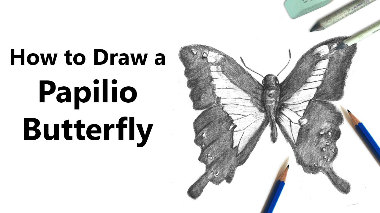 how to draw a butterfly step by step youtube