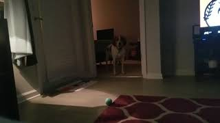 Scared rescue dog discovering him inner puppy!