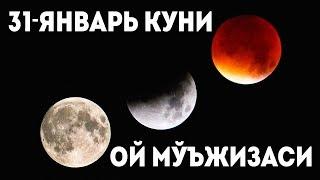 СУПЕРОЙ МУЪЖИЗАСИГА ГУВОХ БУЛИНГ / ОЙ / QIZIQARLI DUNYO