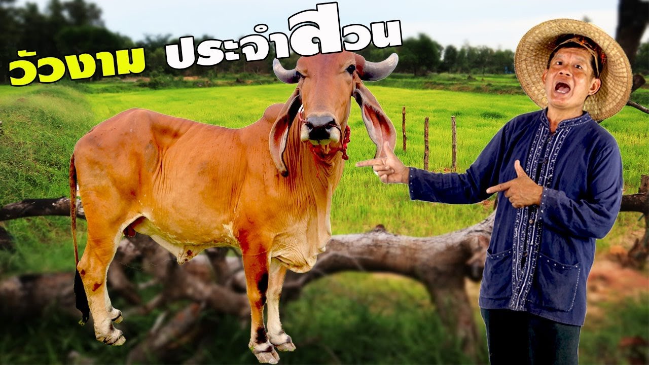 ความสุขที่แท้จริง ของเกษตรกรตัวจริง คิดเอง ทำเอง กินเอง