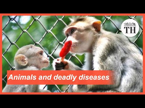 All About Zoonotic Diseases