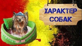 Характер собак | Виды характера собак | Дрессировка.(, 2015-11-12T07:22:22.000Z)