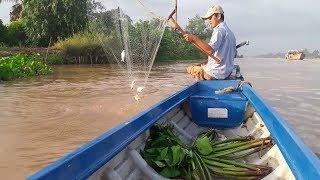 Nghề vớt cá mè vinh (Phần 2) : Nước hừng sáng vớt cá sướng tay | Săn bắt SÓC TRĂNG |