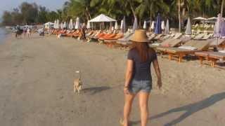 Thai girl jogging along the beach with a stray dog at dawn near Hua Hin , Thailand