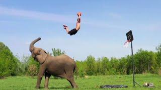 Amazing Elephant Trick Shots | Ross Smith
