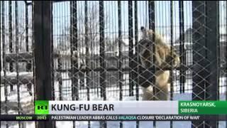 Watch Siberian Kung Fu bear!