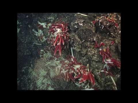 Why explore the deep sea? | Erik Cordes | TEDxTempleU