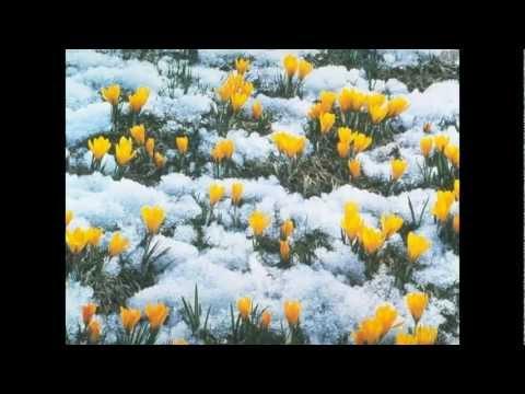 видео: Ф. Шопен - Весенний вальс. Ричард Клайдерман.