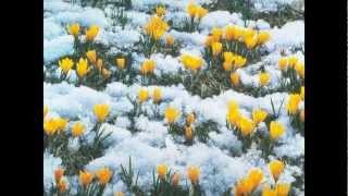 Download Ф. Шопен - Весенний вальс. Ричард Клайдерман. Mp3 and Videos