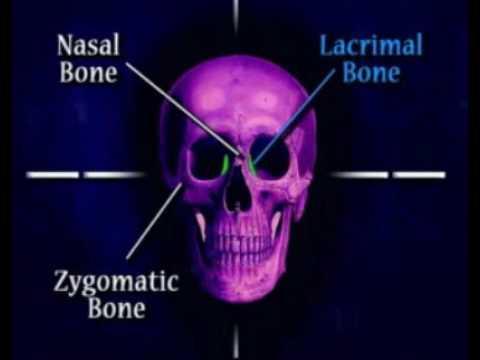 facial bones - YouTube