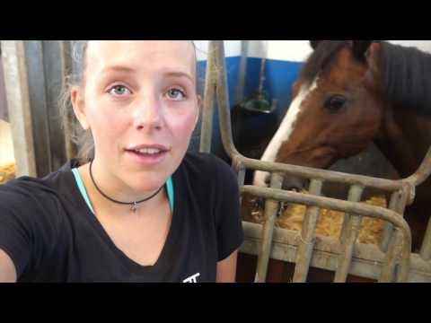 Vlog: Dag op stal bij Romy