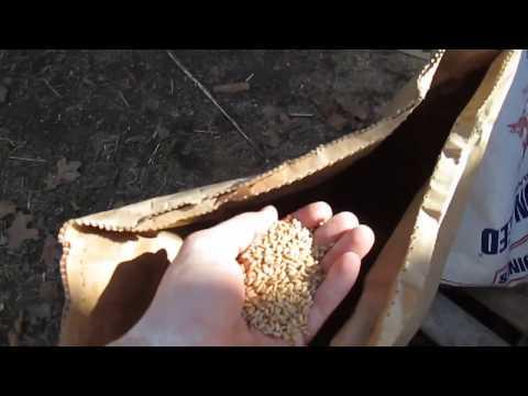 DIY Whole Grain Chicken Feed