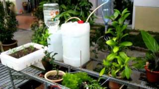 Auto Watering System And Auto Refill (2 In 1)