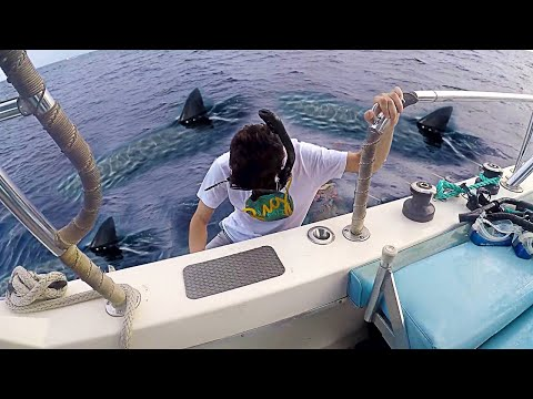 I went swimming with Sharks... (scariest experience ever)