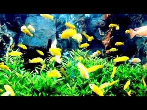 Watch the fish swim (the HD).