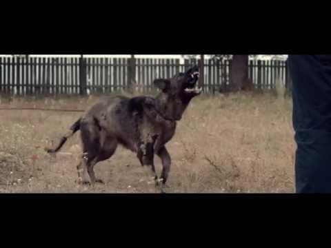 Teaser trailer #2 de Câini — Dogs (HD) streaming vf