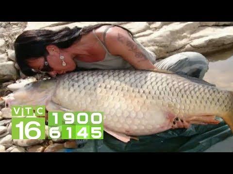 Làm giàu nhờ nuôi cá trắm cỏ theo hướng an toàn | VTC16