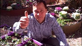 How can I grow a Vegetable Garden in Clay Soil & Other Organic Gardening Questions Answered