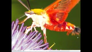 How to get Sharper Bird Pictures