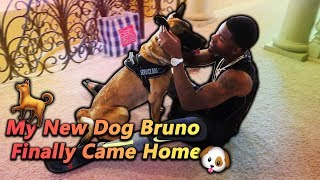 My New Dog Bruno Finally Came Home