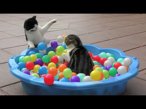 Funny Cats Compilation Video : 4K Ultra Hd 2160p : 2018