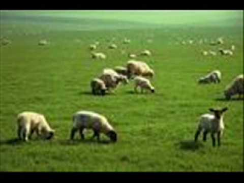 Is the Biblical Account of Sodom and Gomorrah True and ...