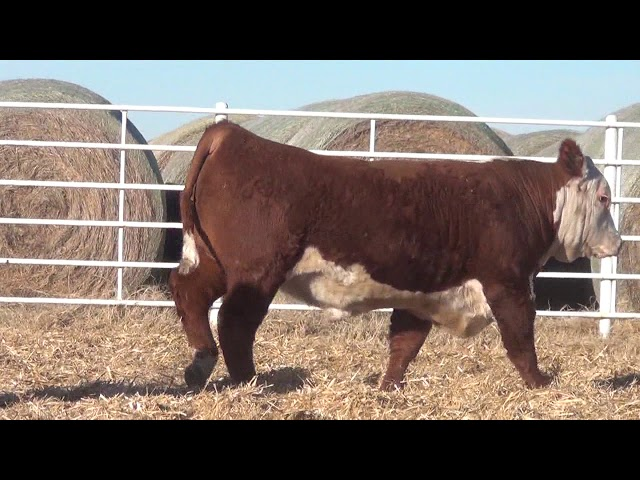 Express Ranches Lot 232