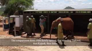 Sities,Turkwel, Kainuk graduate to Ithumba | Sheldrick Trust