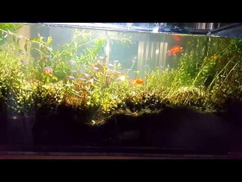 日光燈 熱帶魚 | Doovi