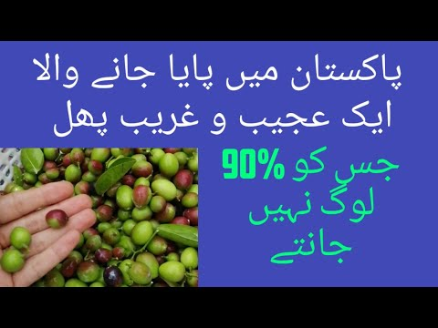 unknown-fruit-in-pakistan-||-desi-eat-vlog-||dragon-fruit||2019