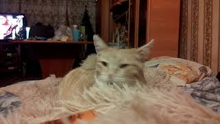 Наша рыжая кошка пришла поласкаться немножко!