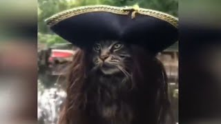 Funniest / Cats and Dogs - Awesome / Funny Pet Animals #6