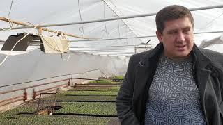17.02.2019 теплицы Фреш салат, досветка рассады