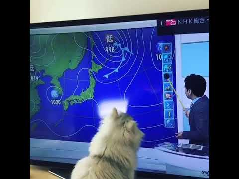 天気予報 動画編