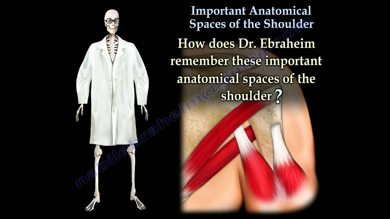 Important Anatomical Spaces Shoulder Anatomy 2 - Everything You Need ...