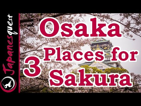 Top 3 Places to See Sakura (Cherry Blossoms) in Osaka!