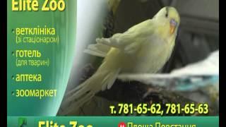 EliteZoo Харьков(Ветеринарная клиника с полным спектром услуг для животных. Операционная палата, стационар для больных..., 2012-12-06T11:48:08.000Z)