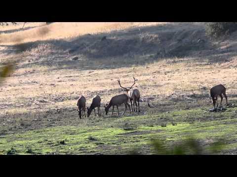 Jack Link's in the Pursuit of Thule Elk