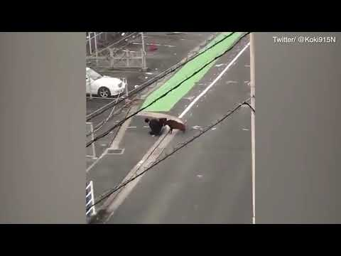 Japanese salaryman gets jumped by wild boar on way to work