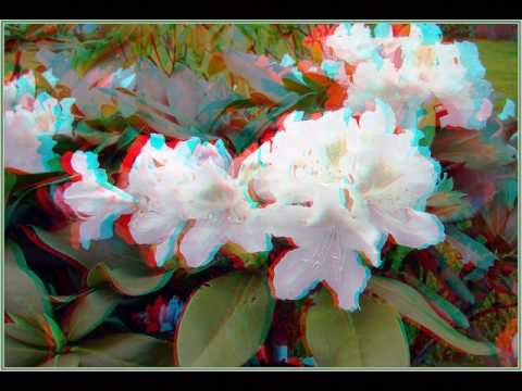 Цветы в 3D (анаглиф). - YouTube 4ca20d7b8924c