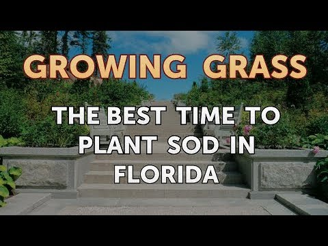 The Best Time To Plant Sod In Florida You